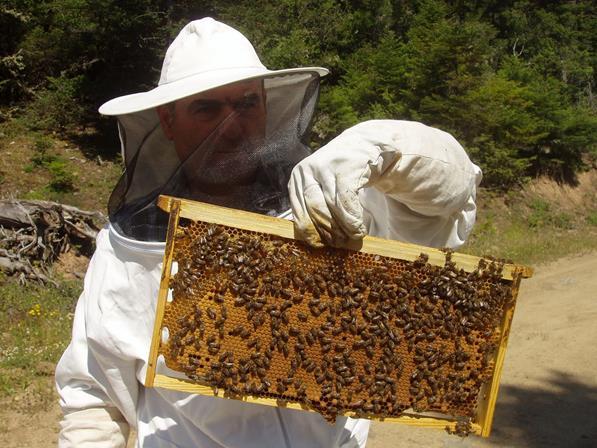 Αποτέλεσμα εικόνας για μελισσοκόμους